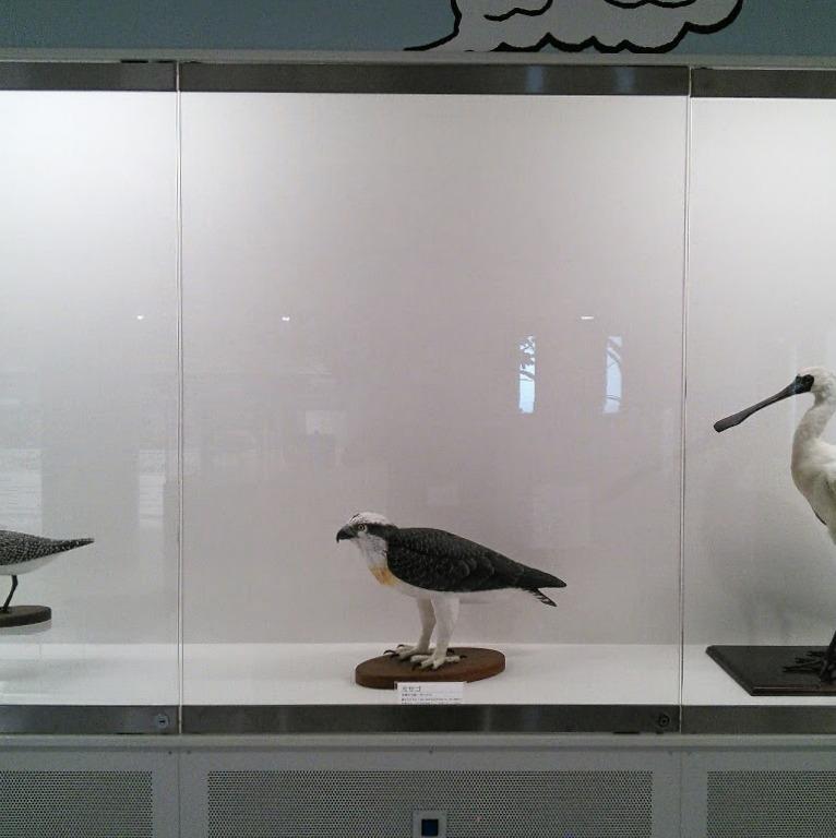1F 常設展示室 漫湖の野鳥