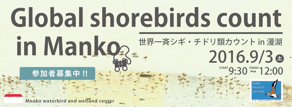 globalshorebird_03